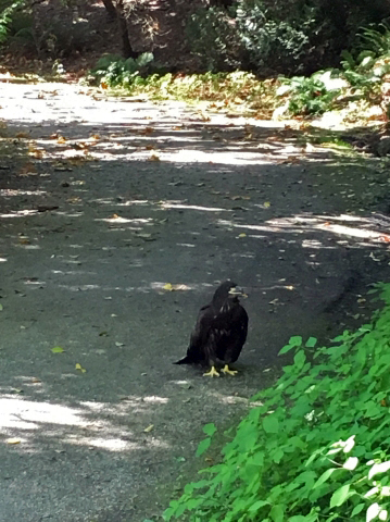 157 My friend saw Darla walking on the westside pond path at 1030am and sent me this photo.jpg
