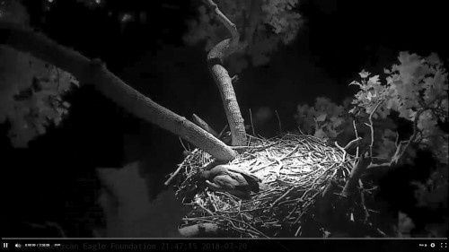 DC Eagle Cam July 20 one on nest Screenshot (161).jpg