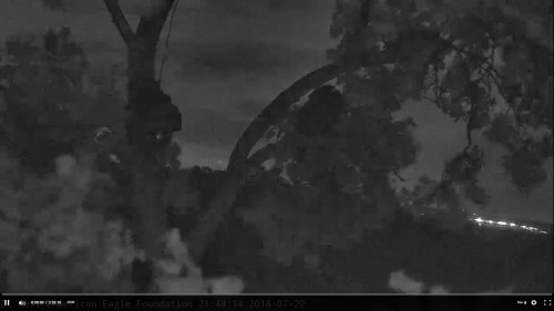 DC Eagle Cam July 20 one up Screenshot (162).jpg