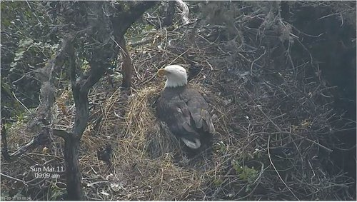 March 11 909 am bc nest.JPG