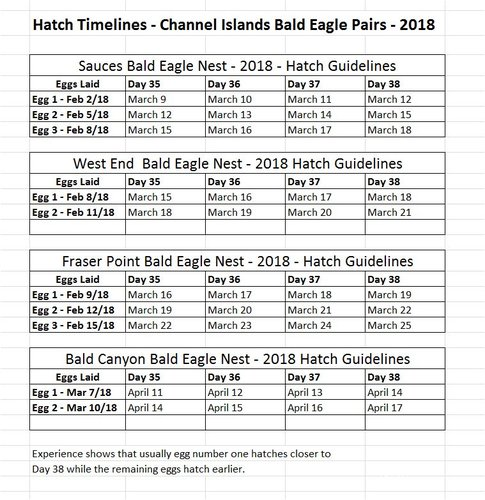 Hatch Guidelines 2018 Channel Islands Bald Eagles.JPG