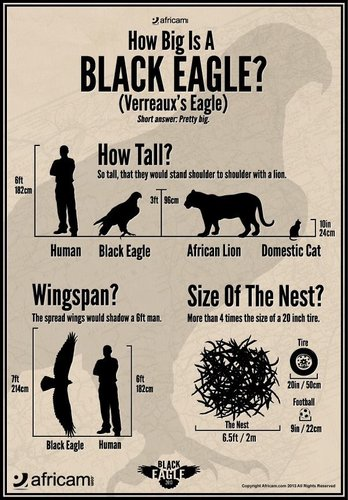 Black Eagle size chart by Africam.jpg