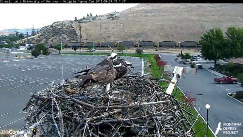 hellgate osprey louis moving stick 9 01 sept 9 .jpg