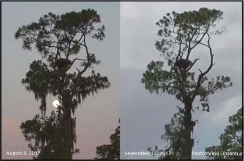 SWF   nest tree comparison   9-17.jpg