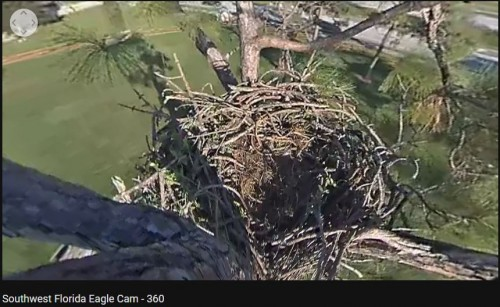 93018 955pm 360 nest view.JPG