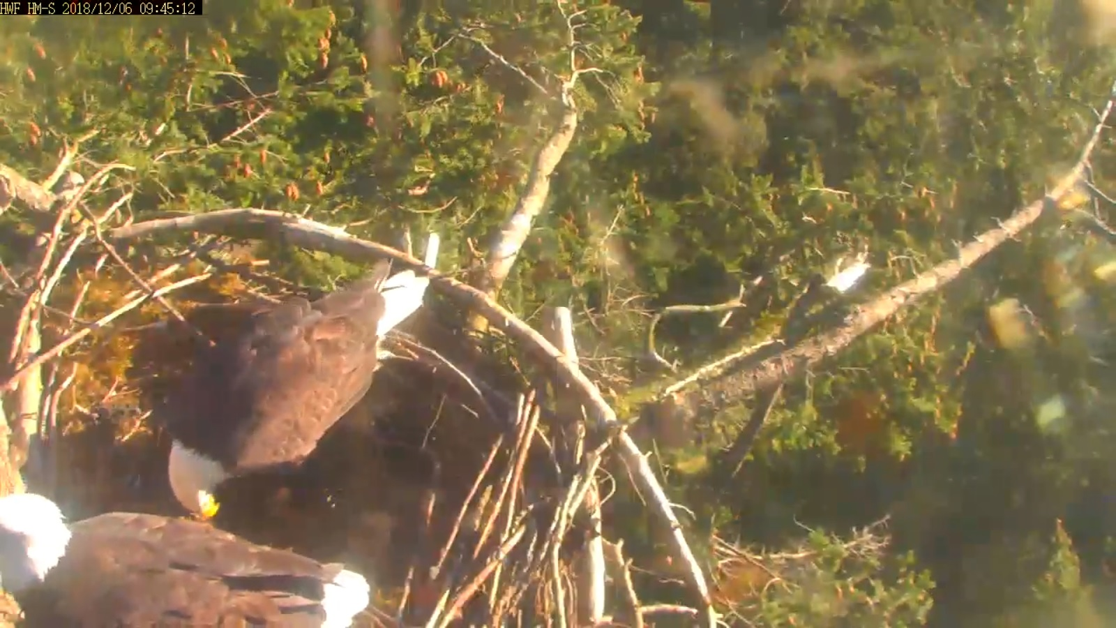 hm dad moved to rail lady in nest 9 45 dec 6 .jpg