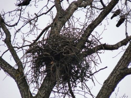 Hastings nest 1.jpg