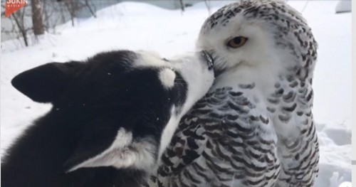 doggy and Snowy Owl_edited.jpg