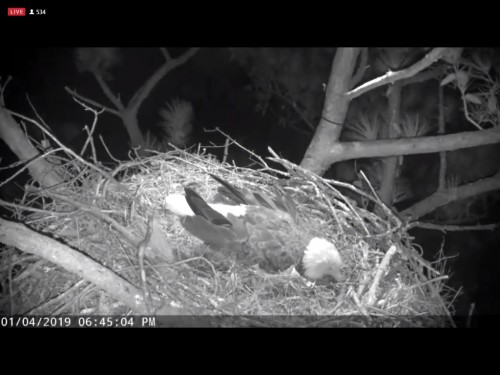 BERRY COLLEGE EAGLES 1 4 19 6 46PM  WONDER IF WE HAVE AN EGG ALREADY.jpg