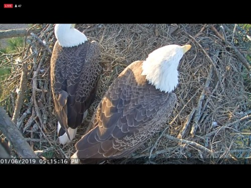BERRY COLLEGE EAGLES 1 6 19 5 17PM MOM AND DAD CAM2.jpg