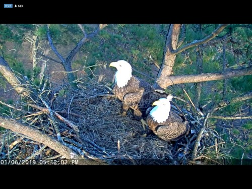 BERRY COLLEGE EAGLES 1 6 19 5 28PM LITLE CONCERNED ABOUT MOM'S LEFT LEG.jpg