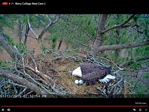BERRY COLLEGE EAGLES 1 13 19 2 14PM TWO EGGS.jpg