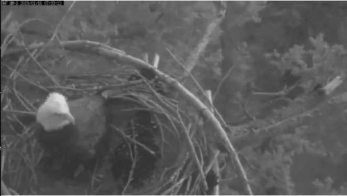 HM Jan 16 19 Lady in nest.jpg