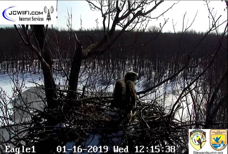 2019-01-16 13_14_22-Trio Bald Eagle Nest Cam -Live _ Stewards of the Upper Mississippi River Refuge .jpg