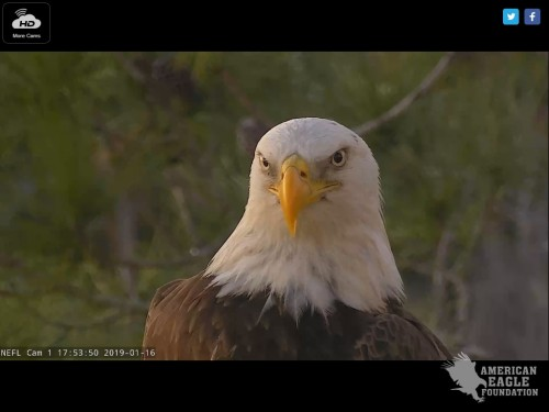 NEFL EAGLES 1 16 19 5 53 PM NICE CLOSEUP.jpg