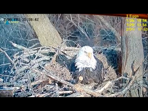 DALE HOLLOW EAGLES 2 8 19 4 2PM THREE EGGS.jpg