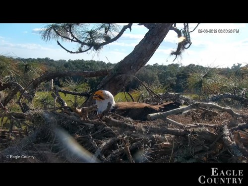 EAGLE COUNTRY 2 8 19 3 52PM INCUBATING.jpg