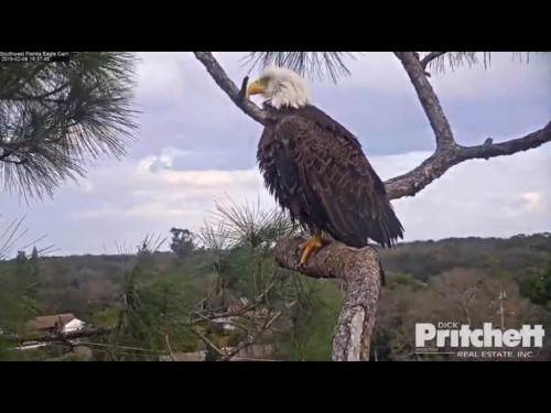 FT MEYERS EAGLES 2 8 19 3 39PM HARRIET.jpg