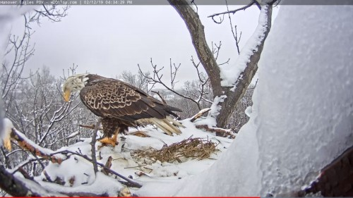 hanover looking over the nest 4 34 feb 12 .jpg