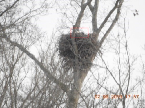 DSCN4124 Rev 1 On the Nest.jpg