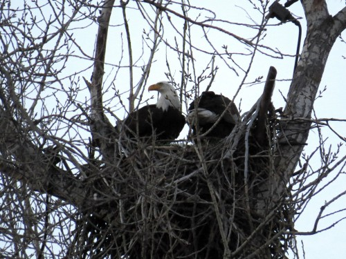 lib & new mate at tb nest.jpg