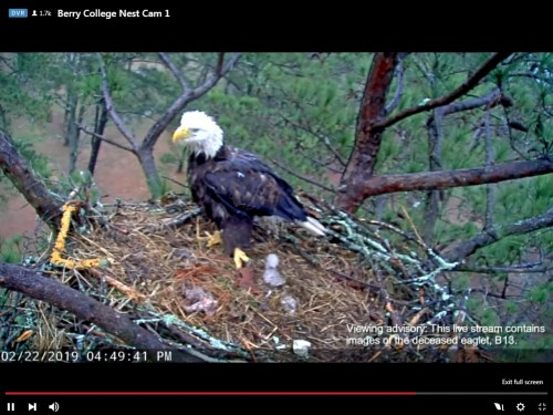 BERRY COLLEGE EAGLES 2 22 19 4 59PM REWIND B 13 DIDN'T MAKE IT, BUT B 12 IS DOING WELL.jpg