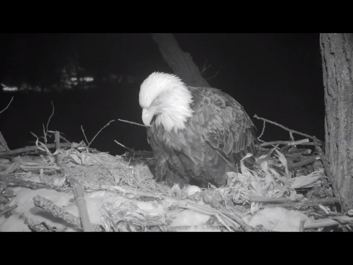 DECORAH  2 22 19 11 45PM FIRST EGG.jpg