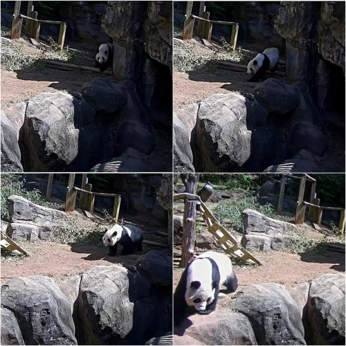 3-22-18 za mama lun getting her exercise.jpg