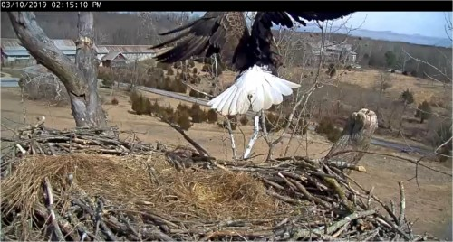 Mar 10 215 pm Mom exits nest.JPG