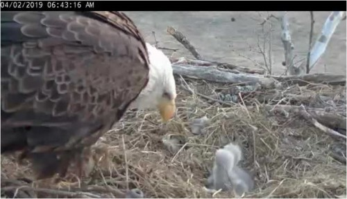 April 2 643 am feeding perhaps.JPG