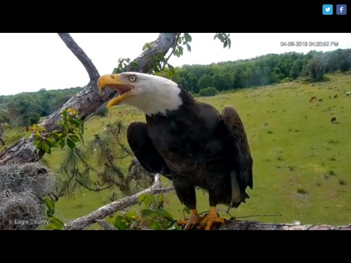 EAGLE COUNTRY 4 6 19 4 22PM CALLING.jpg