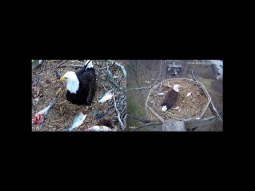 ESTHER AND EINSTEIN 4 6 19 8 03PM INCUBATING.jpg