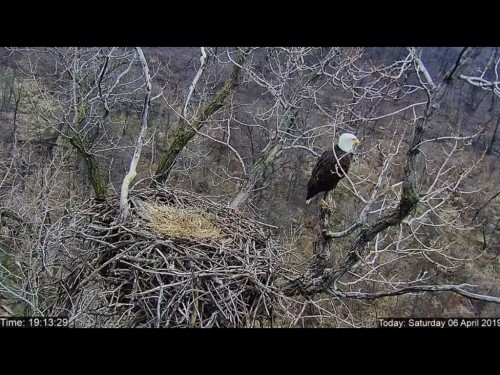 MNDNR 4 6 19 8 14PM EMPTY NEST.jpg