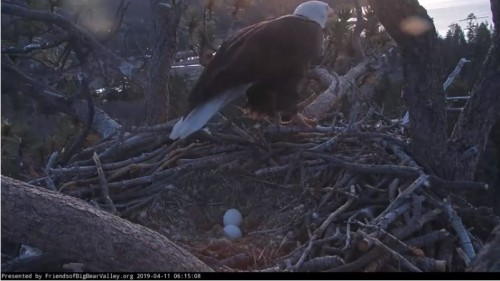 6.35 am Mrs BB is up and out of the nest.JPG