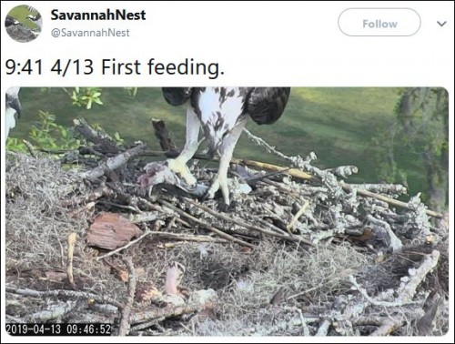9.41am Chick's First Feeding.JPG