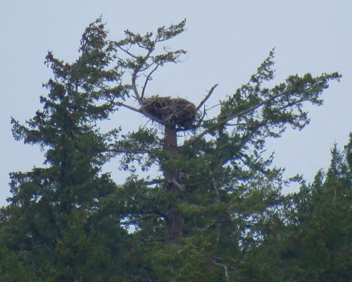 Royal Roads Nest from lagoon 14 Apr. 2019.JPG