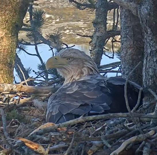 2019-04-17 11_01_53-Eagle Cam #1 - Baron Blue - White Tailed Eagles Nest Live - YouTube.jpg