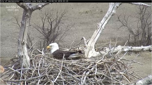 March 25 New Nest with a cam.JPG