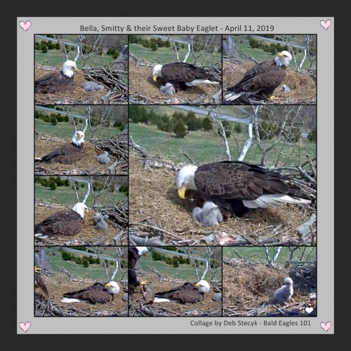 A Collage April 11 2019 Bella Smitty and their Chick.jpg