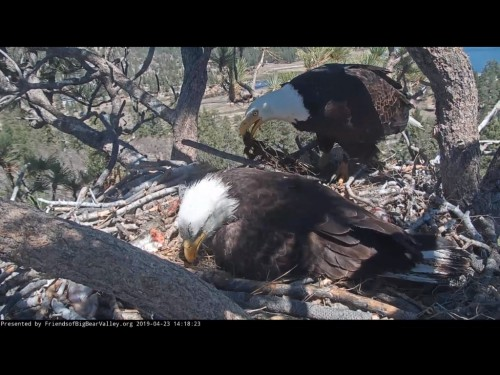 BIG BEAR EAGLES 4 23 19 5 20PM ABOUT TIME YOU GOT HERE.jpg