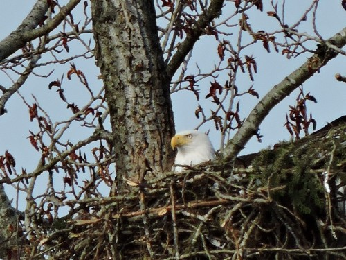 5-2-2019  Hastings Nest.jpg