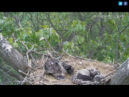 HANOVER EAGLES 5 11 19 1 54PM RESTING.jpg