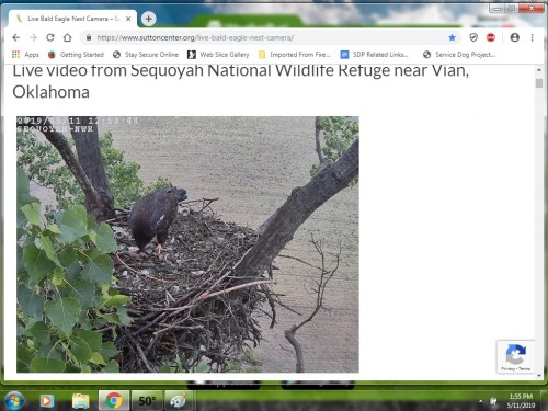 VIAN EAGLES 5 11 19 1 56PM EATING.jpg