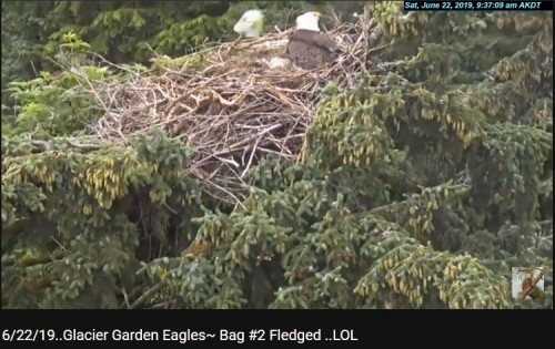 62219 bag 2 fledged.JPG