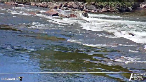 hellgate the rapids 12 44 july 12 .jpg
