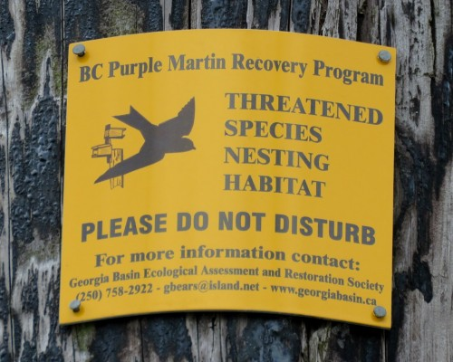 Goldstream Purple Martin Sign July 15.JPG