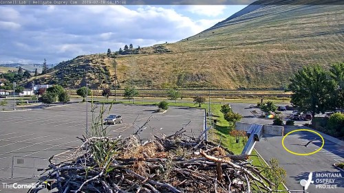 hellgate iris flew across parking lot from direction of valley 8 45 july 19.jpg