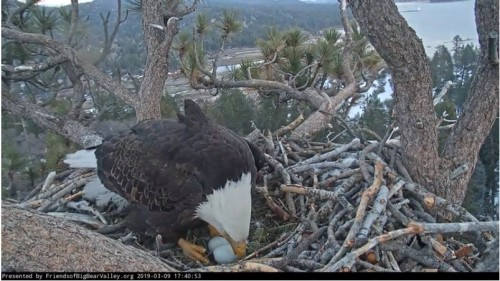 1 Two eggs at Big Bear 3-9-19.JPG