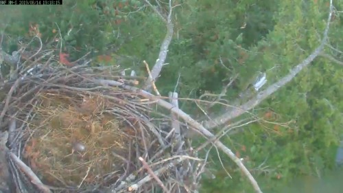 hm nest south cam windy 7 18 aug 14 .jpg