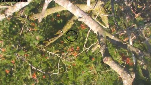 hm further down the tree 2 02 pm .jpg
